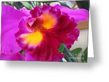 Hawaiian Orchid 2 Greeting Card