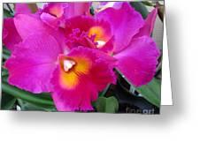 Hawaiian Orchid 3 Greeting Card