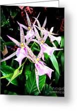 Hawaiian Orchid 31 Greeting Card