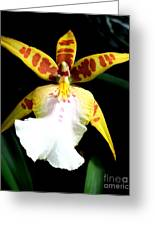 Hawaiian Orchid 32 Greeting Card