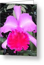 Hawaiian Orchid 33 Greeting Card
