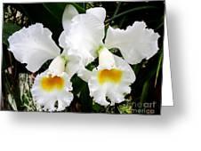 Hawaiian Orchid 35 Greeting Card