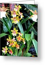 Hawaiian Orchid 36 Greeting Card