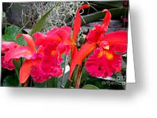 Hawaiian Orchid 37 Greeting Card