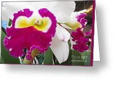Hawaiian Orchid 4 Greeting Card