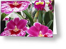 Hawaiian Orchid 5 Greeting Card