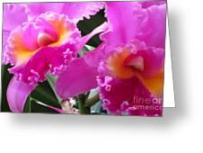 Hawaiian Orchid 6 Greeting Card