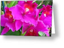 Hawaiian Orchid 8 Greeting Card