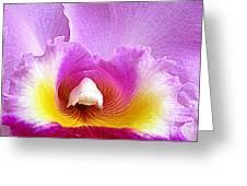 Hawaiian Orchid 9 Greeting Card