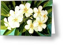 Hawaiian Plumeria #56 Greeting Card