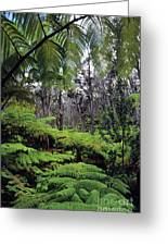 Hawaiian Rainforest Greeting Card