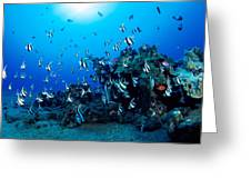 Hawaiian Reef Scene Greeting Card by Dave Fleetham - Printscapes