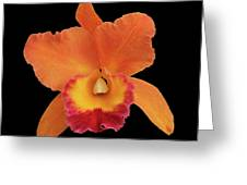 Potinara Hawaiian Thrill, Paradise Greeting Card