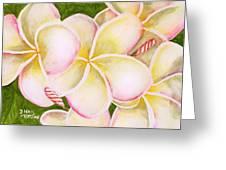 Hawaiian Tropical Plumeria Flower #483 Greeting Card