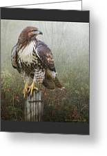 Hawk And Barbed Wire Greeting Card