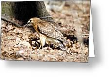 Hawk And Gecko Greeting Card by George Randy Bass