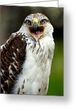 Hawk Greeting Card