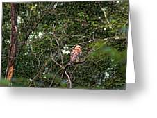 Hawk Drying Out Greeting Card