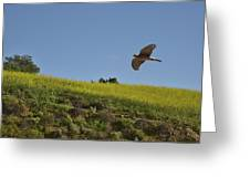 Hawk Flying Over Field Of Yellow Mustard Greeting Card