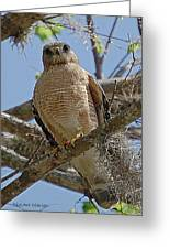 Hawk Gawk Greeting Card