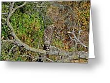 Hawk In Hiding Greeting Card