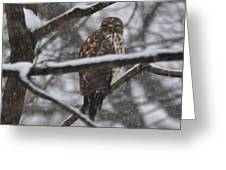 Hawk In Snow Storm Greeting Card