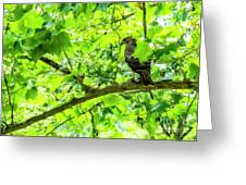 Hawk In Sycamore Greeting Card