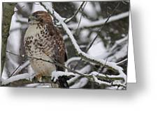 Hawk In Winter Greeting Card