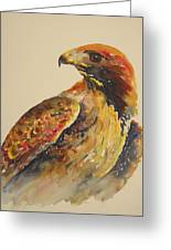 Hawk Messenger Greeting Card