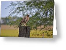 Hawk On A Fence Post Greeting Card