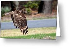 Hawk On The Fly Greeting Card