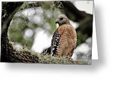 Hawk On Watch Greeting Card