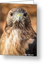 Hawk Eyes Greeting Card