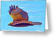 Hawk Speed Greeting Card