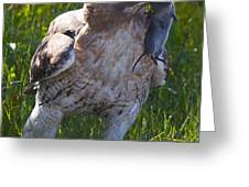 Hawk With Dinner Greeting Card