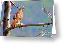 Hawk With Prey Greeting Card