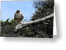 Hawk's Perch Greeting Card