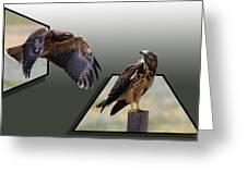 Hawks Greeting Card by Shane Bechler