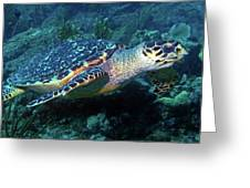 Hawksbill Sea Turtle 3 Greeting Card
