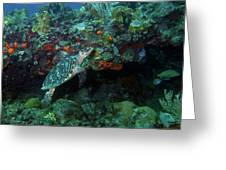 Hawksbill Sea Turtle 4 Greeting Card