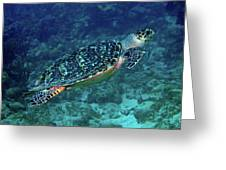 Hawksbill Sea Turtle 5 Greeting Card
