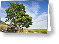 Haworth Moor Sycamore Greeting Card