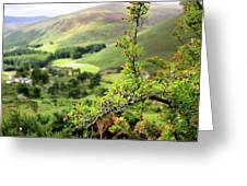Hawthorn Branch With View To Wicklow Hills. Ireland Greeting Card