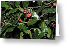 Hawthorn Greeting Card
