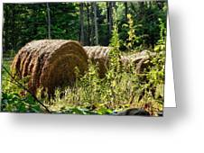 Hay Bay Rolls Greeting Card