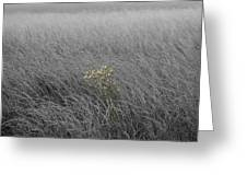 Hay Daisy In The Fog Greeting Card