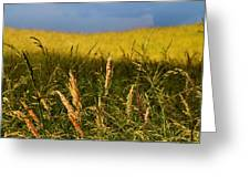 Hay Field Ready To Cut Greeting Card