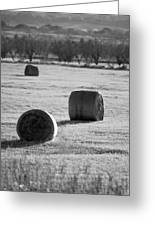 Hay Is For Horses Greeting Card