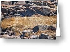 Hay Ocean Rocks Greeting Card
