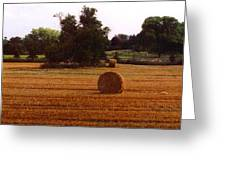 Hay Rolls 2 Db  2 Greeting Card